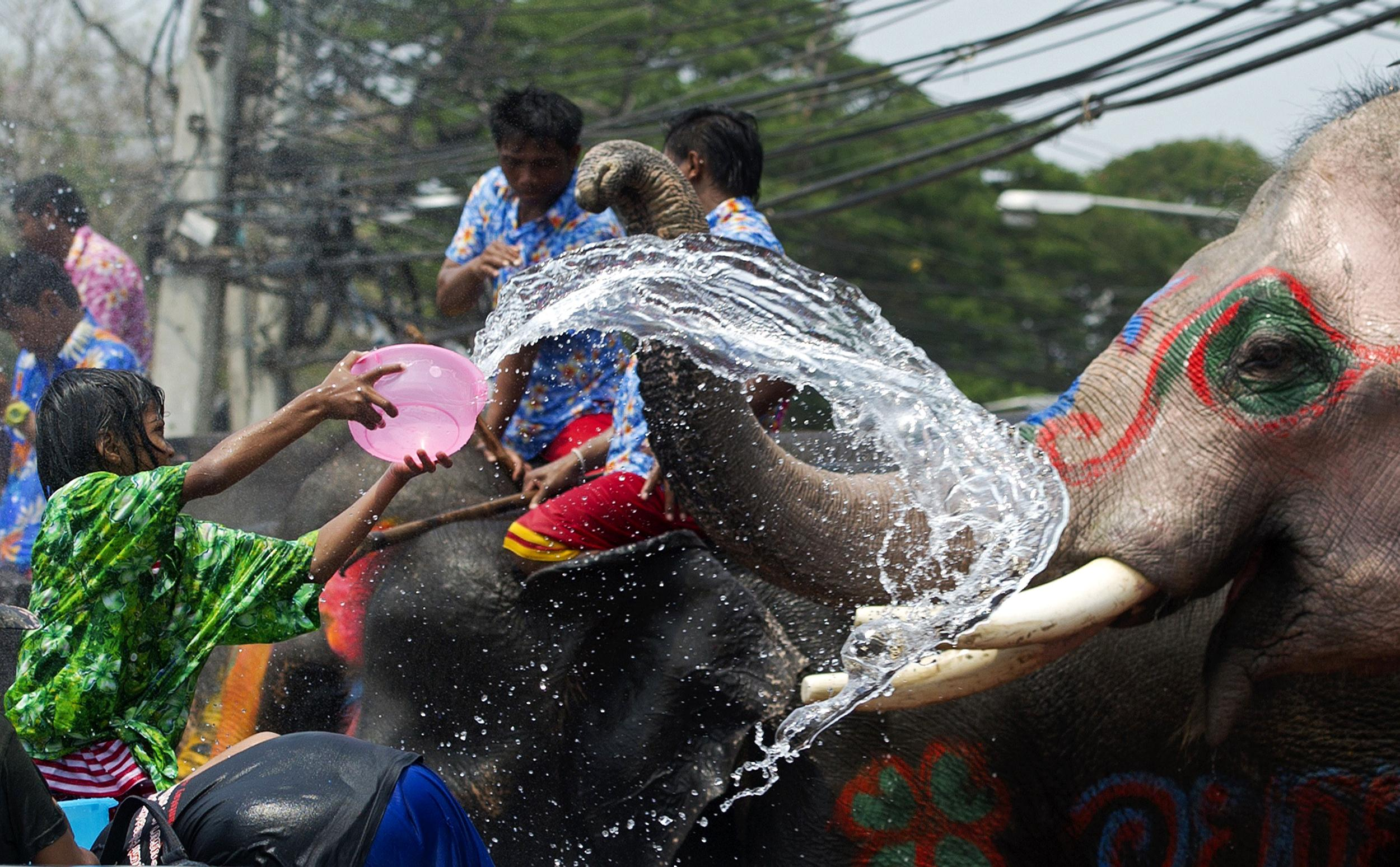 Songkran with Elephant